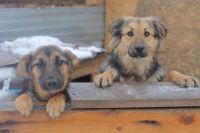 На строительство приюта для бездомных животных в Оренбурге выделят 3,6 млн рублей.