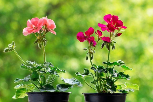 Украшаем сад. Какие цветы идеально подходят для уличных кашпо