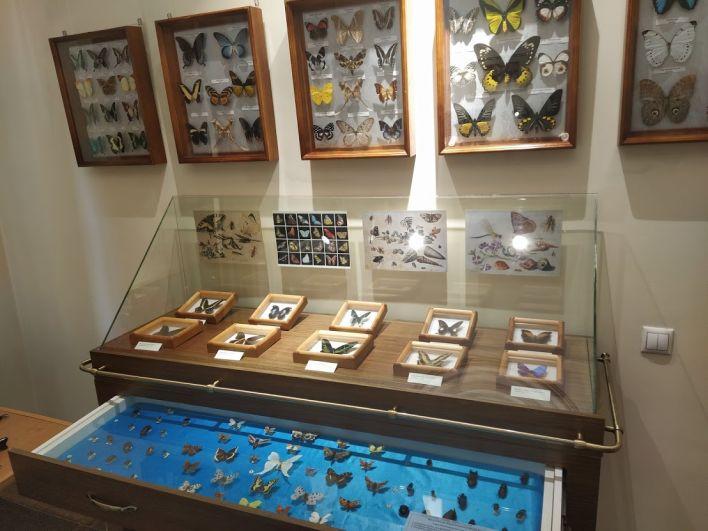 Коллекция экзотических бабочек.