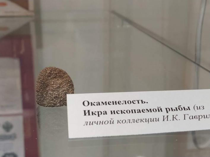 Окаменевшая икра древней рыбы, найденная на берегах реки Тунгуски.