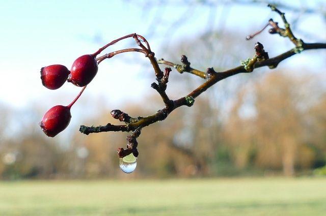 Потепление ожидается в Смоленской области сегодня днем, 28 марта. По данным метеорологов, столбики термометров поднимутся до 13 градусов тепла.