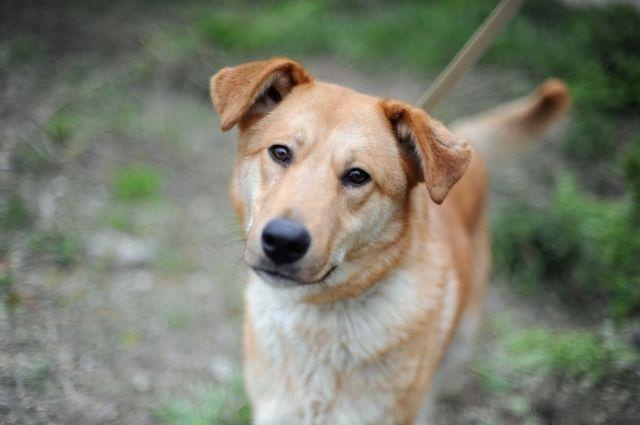 По мнению зоозащитников чипированные собаки не агрессивны.