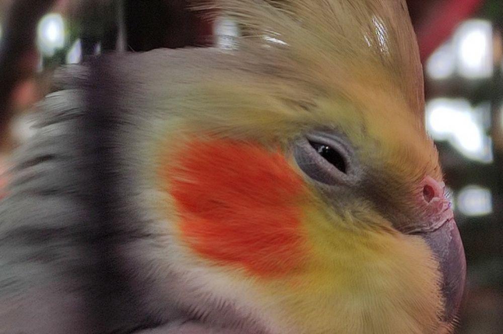 В тропической оранжерее есть клетка с попугайчиками