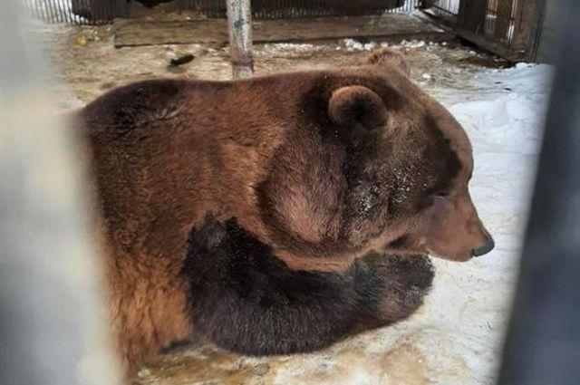 В этом году обитатель парка – медведь Степана празднует свой 20-летний юбилей