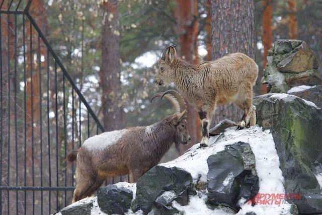 До 15 апреля пенсионеры смогут бесплатно проходить на территорию зоосада, гулять и знакомиться с животными.