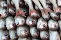 В Добрянке массово погибла рыба.