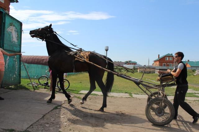 В Буинске есть ипподром, где можно покататься на пони и лошадях.