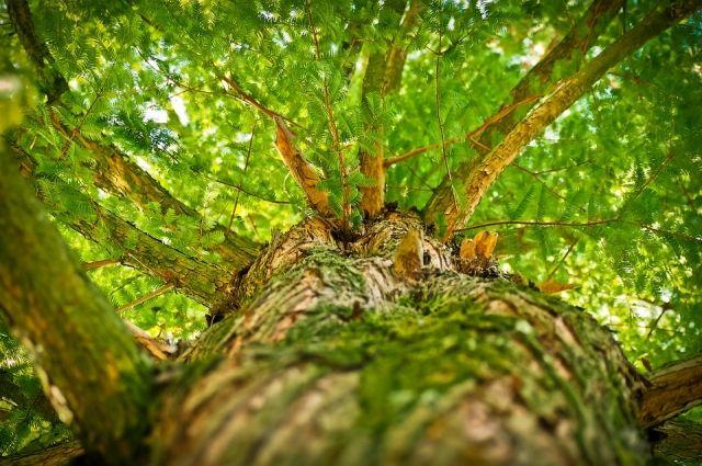 Ущерб лесам был оценен в 272 тыс. рублей