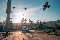 Обычным сизым голубем, завсегдатаем парков и скверов, никого не удивишь, но не все знают, что Калуга раньше славилась породистыми представителями этих пернатых
