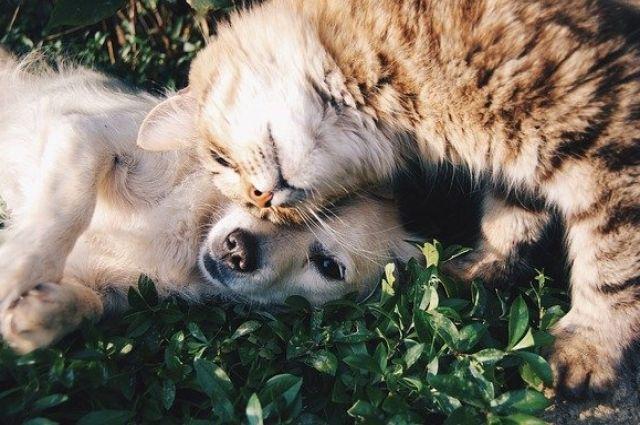 В РФ будут выпускать по 10 000 доз вакцины от COVID-19 для животных в день