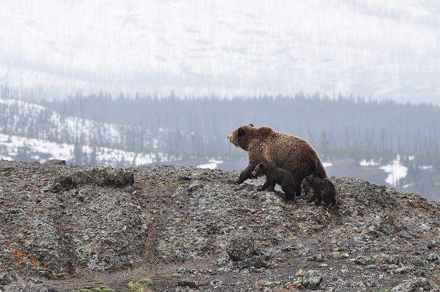 Следы медведя обнаружили на снегу в нацпарке в Башкирии