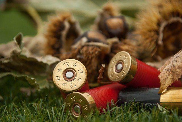 В Челябинске просят запретить весеннюю охоту на утку
