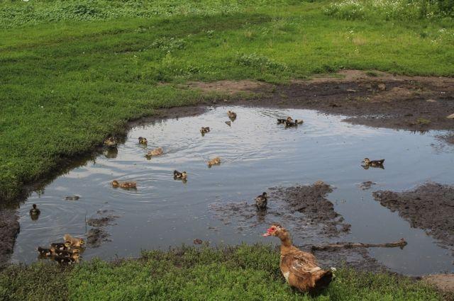На добычу уток и гусей оренбургским охотникам отведено 16 дней.
