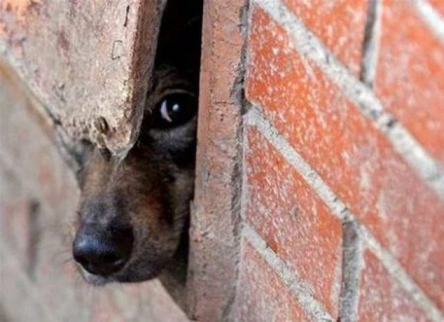 По результатам полицейской проверки будет решаться вопрос о возбуждении уголовного дела за «Жестокое обращение с животными».