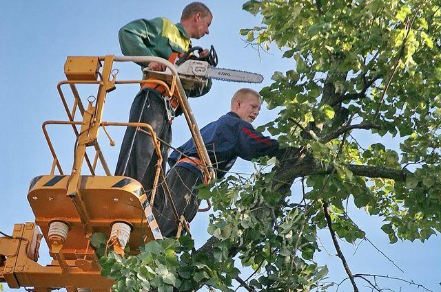 Обрезка деревьев также вызывает массу нареканий горожан.