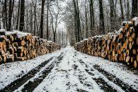 Лесные угодья Тюменской области понесли ущерб в полтора миллиона