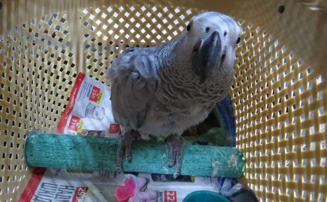 Продавец предложила покупателю оформить доставку попугая через транспортную компанию, которая занимается перевозкой животных