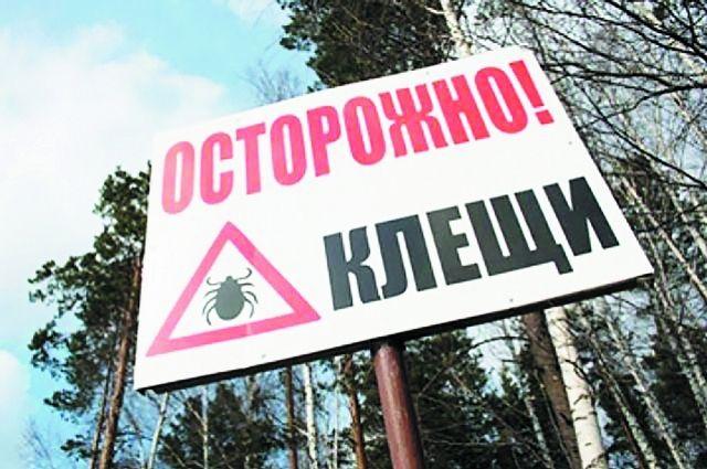Членистоногие активизировались на южных склонах.