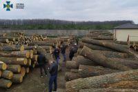 СБУ раскрыла схему масштабного нелегального экспорта древесины.