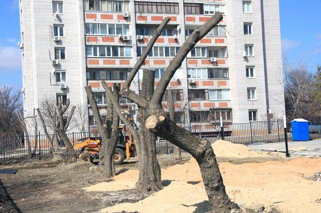 Весь Волгоград сейчас «украшен» такими деревьями-обрубками.