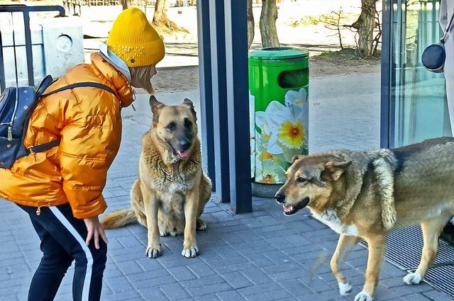 Никогда не знаешь, что ожидать от встречи с собакой.
