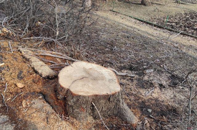 Определить состояние дерева на глаз, да еще в безлиственном виде - сухое или нет - невозможно.