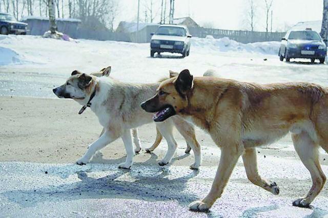 От рук идейных борцов с бездомными животными страдают как уличные псы, так и домашние любимцы.