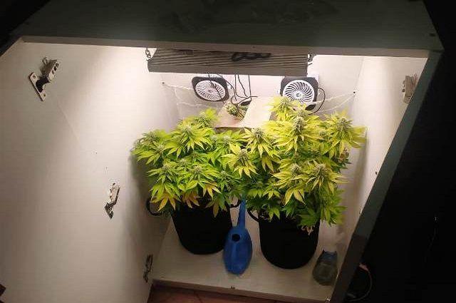 Мужчина выращивал марихуану в шкафах в Уфе