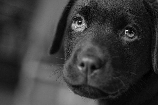 В Глазове спасли собаку, уплывшую на льдине