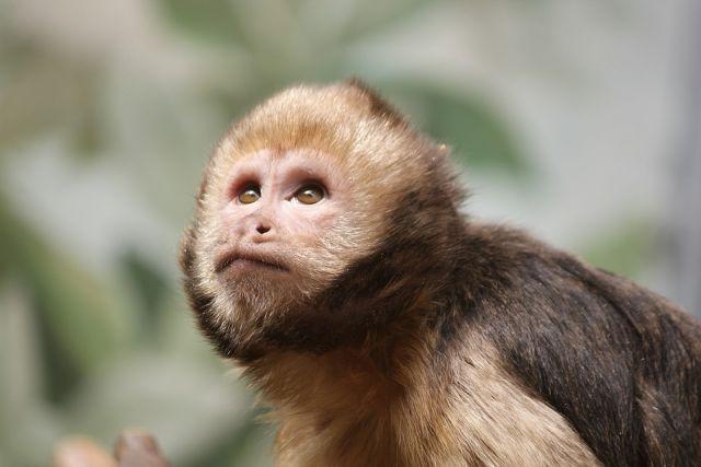 Новые российские вакцины от COVID-19 прошли испытания на приматах