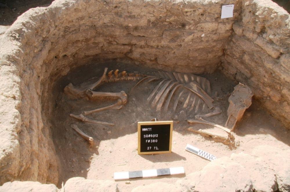 Район, где проходили раскопки, расположен между храмом Рамсеса III в Мединет-Абу и храмом Аменхотепа III в Мемноне.