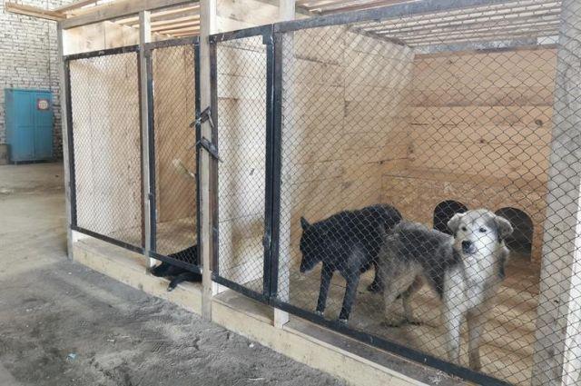 Агрессивные собаки пожизненно содержаться в приютах.