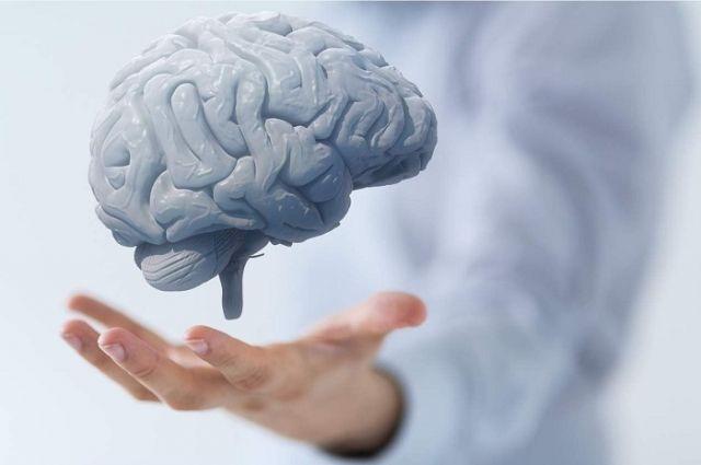 Ученые определили дату формирования современного мозга человека