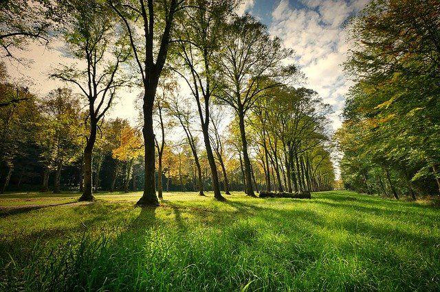 В Голышмановском округе появится новый парк
