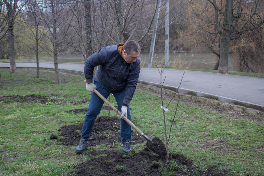 За каждым деревом в дальнейшем будут ухаживать