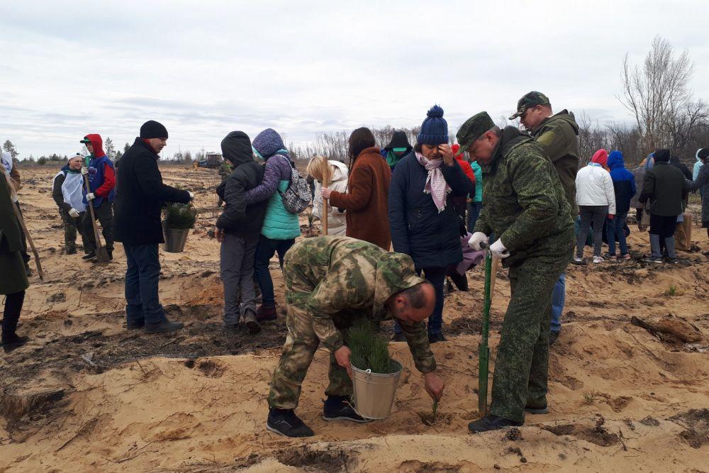 В Усть-Донецком районе высадили крымские сосны
