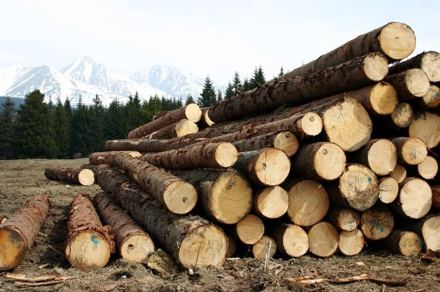 Специалисты краевого Россельхознадзора проверили более 1,66 млн кубометров круглого леса и пиломатериалов.