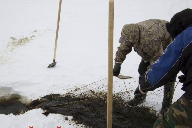 На Ямале рыбаки перепутали нефть с водорослями