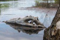 Практически во всех районах Красноярского края количество осадков, выпавшее за зиму, превышает норму.