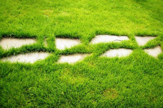 Мировой газон - газонная трава