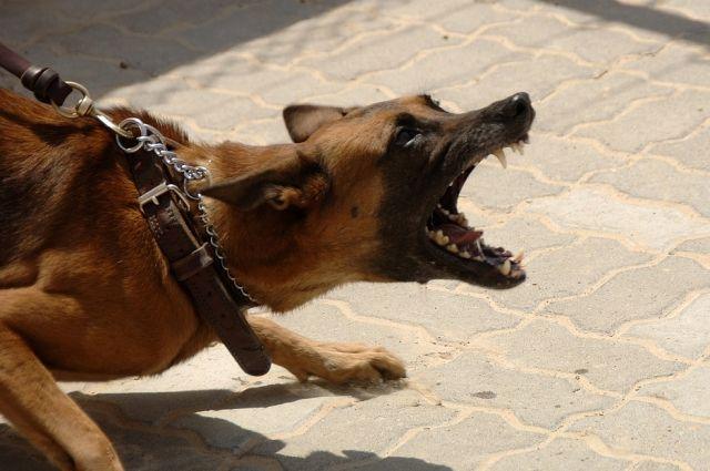 В Ноябрьске женщина с ножом и собакой напала на беременную