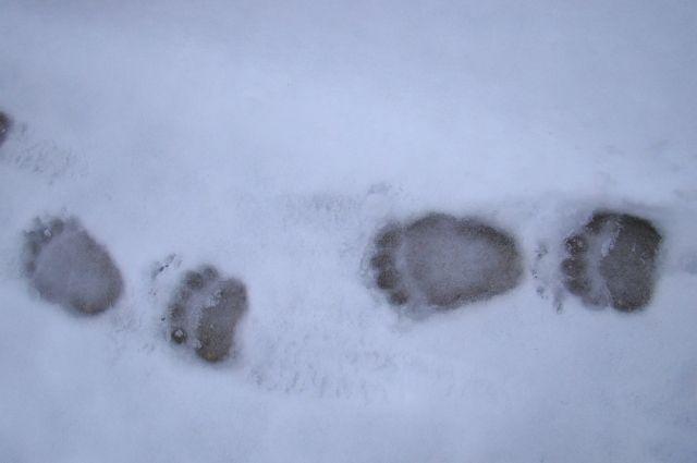 Как раз сейчас медведи выходят из спячки, сообщили в Минприроды.