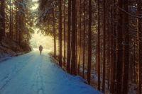 Ялуторовчанам запретили находится в лесу и пользоваться мангалами