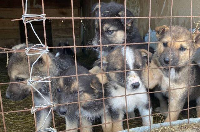 Примерно у 40% животных в приюте имеются владельцы