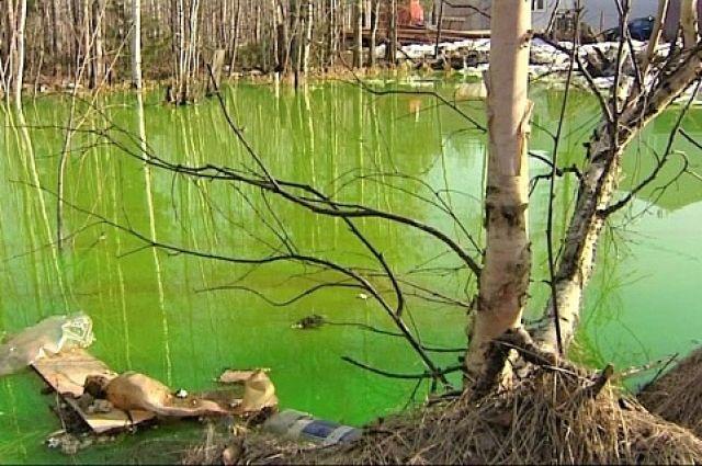 Возле озера находились трупы щенков и мусор