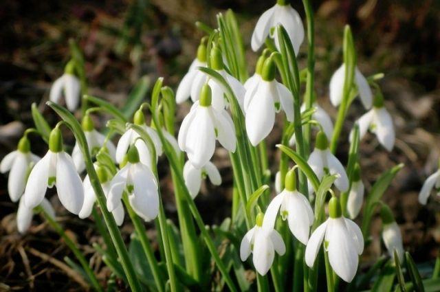 19 апреля: праздник, приметы, день ангела, православный календарь