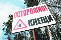 Случаи присасывания зарегистрированы в Шарыповском, Ермаковском, Шушенском, Курагинском районах и в Красноярске.