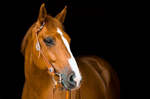 В Новоорском районе девятиклассник упал с лошади и получил серьезные травмы головы.