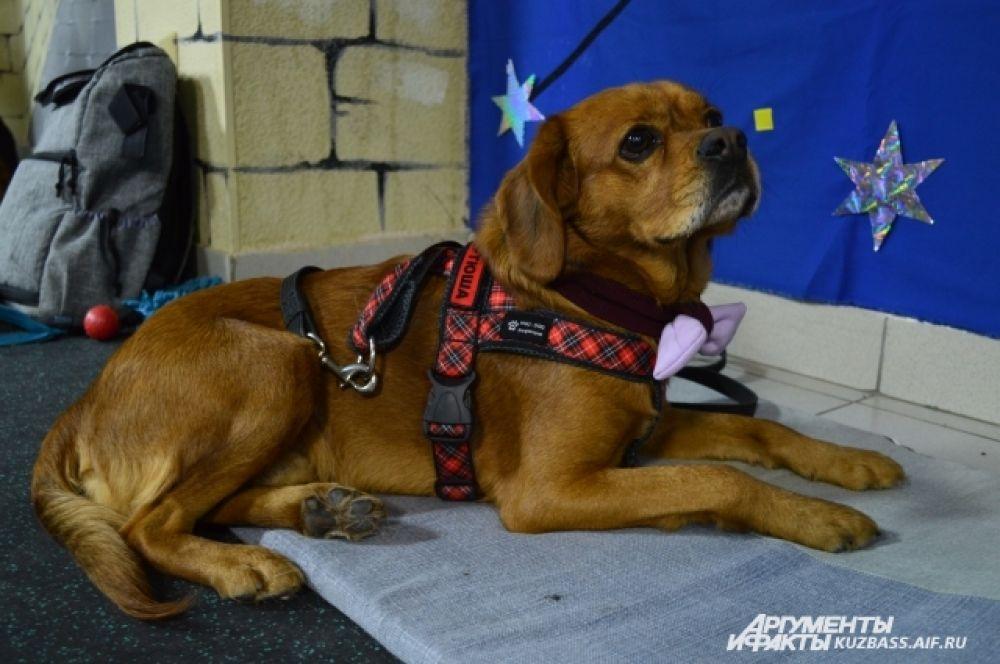 Всего в качестве фотомоделей выступило 11 собак, которых привели волонтеры.