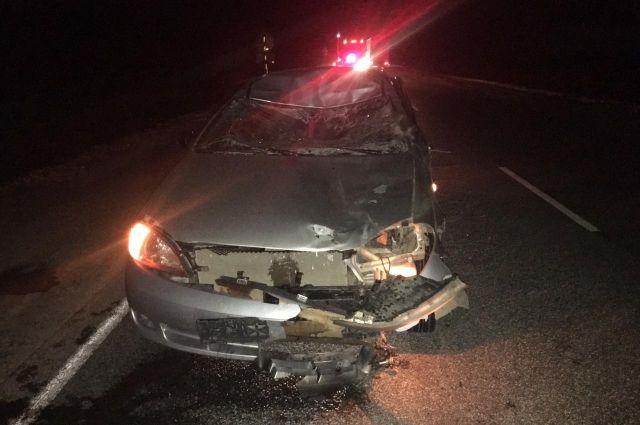В ДТП с участием лося в Удмуртии пострадали двое взрослых и ребенок